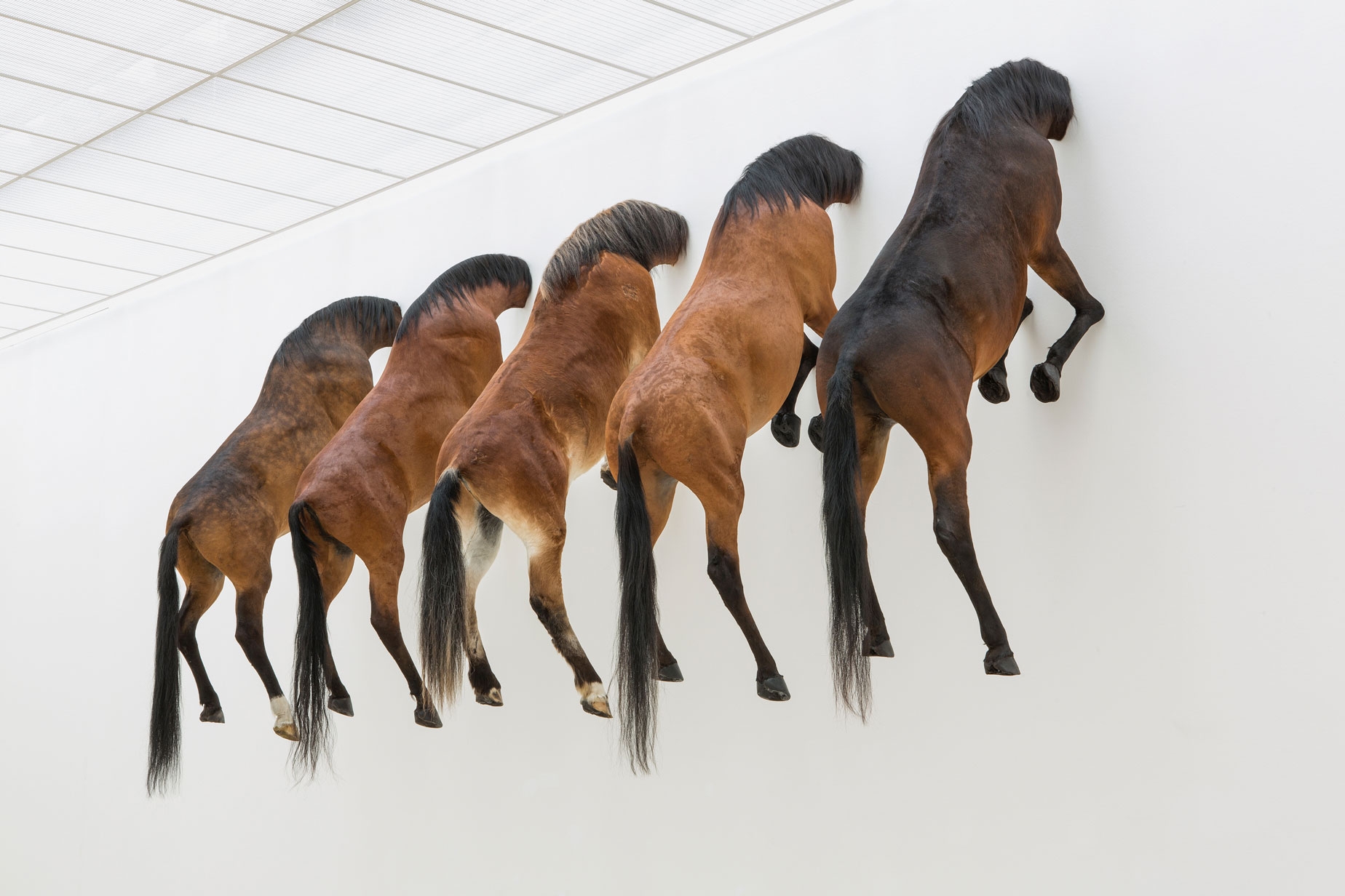 Maurizio Cattelan's 3 editions + 2AP of Untitled 2007, Exhibition view, Kaputt, Fondation Beyeler 2013