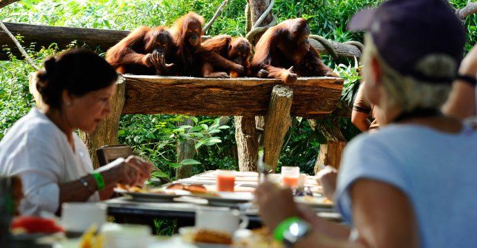 The Singapore Zoo
