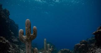 The Cacti Series by Claudia Comte. East Portland Fish Sanctuary, Jamaica (2019)