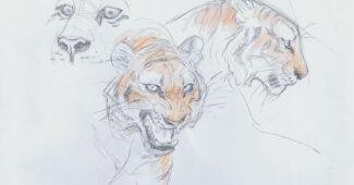 Mushka sketches by Andreas Deja